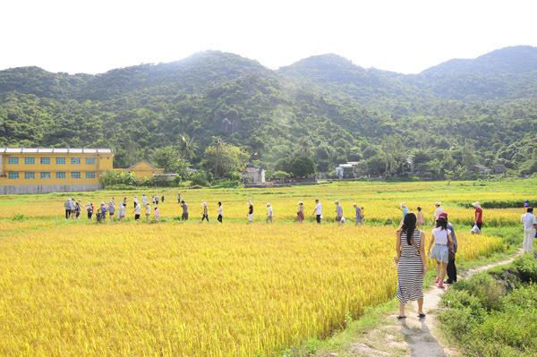 Và đừng quên ghé thăm ngôi chùa Hải Tạng nằm giữa cánh đồng lúa ngát hương.