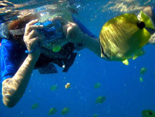 Bạn có thể dễ dàng đến gần những sinh vật biển và chụp lại những khoảnh khắc đẹp dưới đáy đại dương.