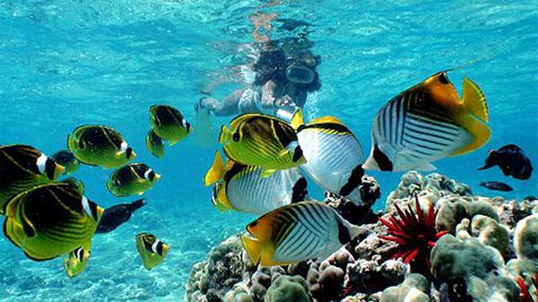 Vịnh Hanauma là nơi cư trú của hơn 450 loài sinh vật biển.