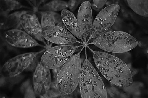 rain12-165588-1370259910_500x0.jpg