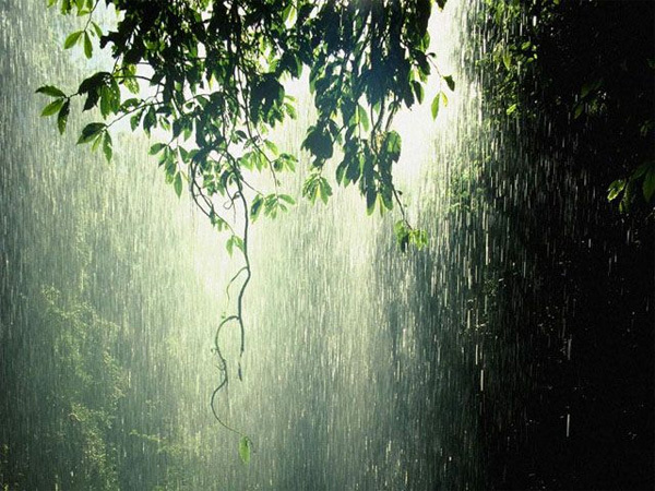 ... cho đến những cơn mưa trắng xóa như trút nước,