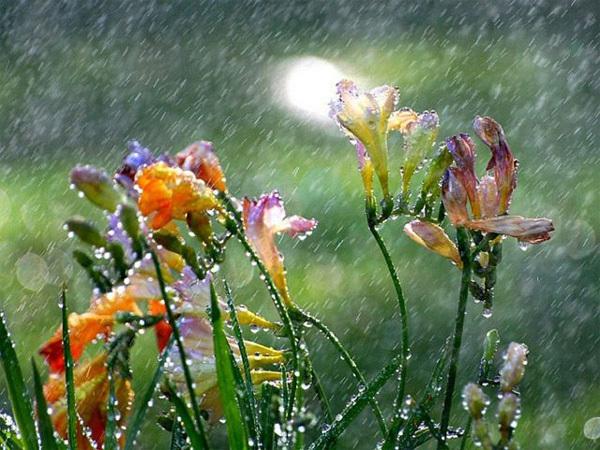 rain7-342085-1370259909_600x0.jpg