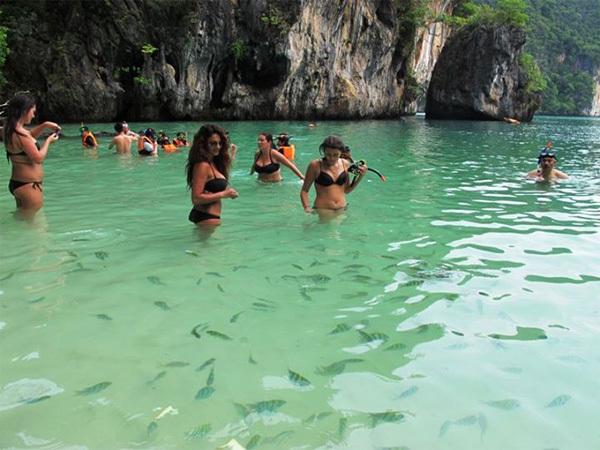Cá bơi lượn tung tăng gần gũi với du khách.