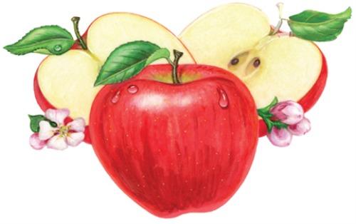 dấm táo có công dụng thần kỳ giúp giảm mập và bài trừ chất độc ra khỏi cơ thể.