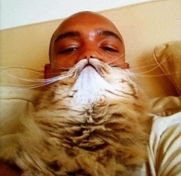 Để thực hiện những bức ảnh này không khó một chút nào, bạn chỉ cần có một chú mèo ngoan ngoãn, biết tạo dáng cho bạn chụp ảnh là được.