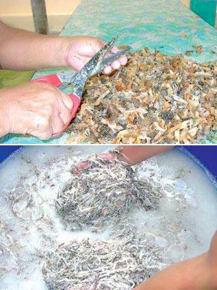 Tổ yến lấy về lựa ra lông, đất, cỏ... cắt thành miếng nhỏ, tiếp tục xử lý (ảnh trái). Ngâm vào nước cho tạp chất nổi lên rồi ngâm thuốc tẩy cho trắng, sau đó dùng nước sôi rửa cho đến khi không còn mùi thuốc tẩy (ảnh phải).