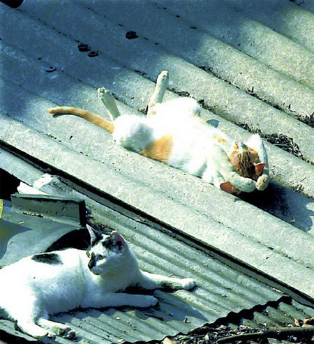 Vừa ngủ vừa tắm nắng trên mái nhà với tư thế rất... gợi cảm.