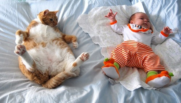 Mèo béo bắt chước dáng ngủ của em bé.