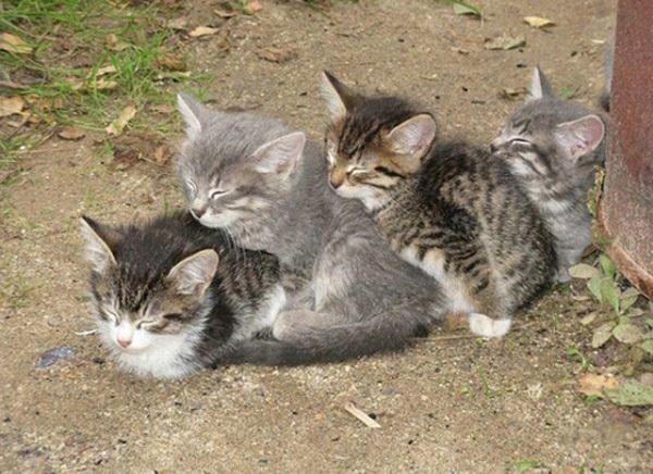 Đàn mèo con gối đầu lên nhau ngủ.