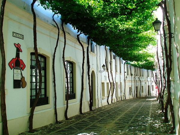 Nằm nép mình trong một khu phố cổ ở Jerez thuộc tỉnh Cádiz, Andalusia (Tây Ban Nha), con đường nhỏ lát gạch đá rợp bóng mát của những cây dây leo mang đến sự thoải mái cho người đi bộ.