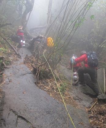 Một lối lên đỉnh Fansipan. Ảnh: Lao động