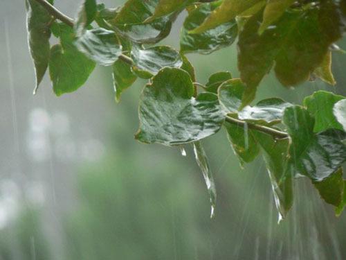 Rain4-1375094445_600x0.jpg