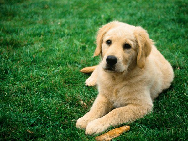dog-jpeg-1375257890_600x0.jpg