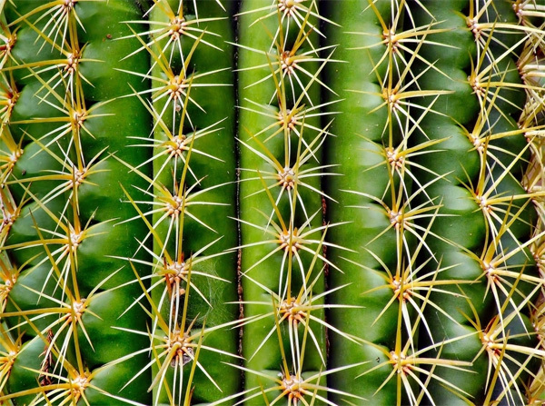 nature1-1375241580_600x0.jpg