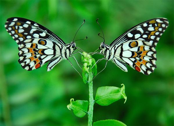 nature6-1375241581_600x0.jpg