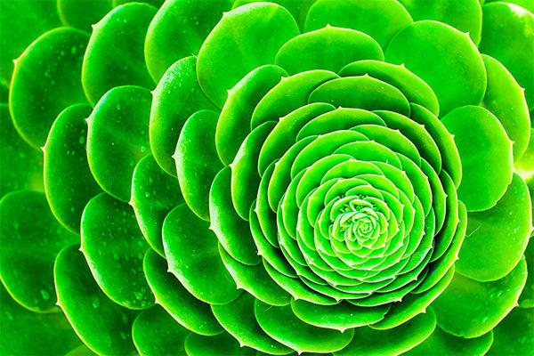 nature8-1375241581_600x0.jpg