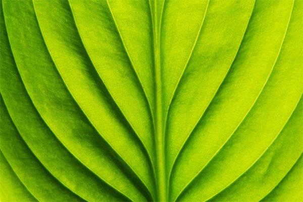 nature9-1375241581_600x0.jpg