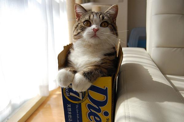 cat1-1376099016_600x0.jpg