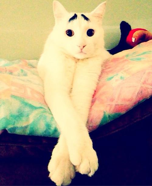 cat10-1376099018_600x0.jpg