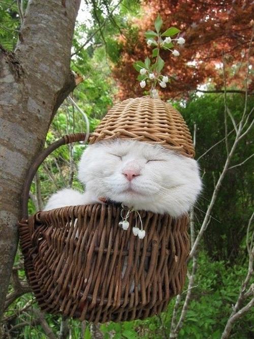 cat11-1376099018_600x0.jpg