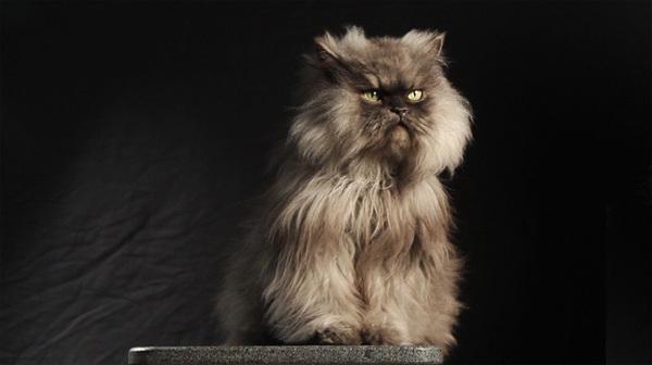 cat12-1376099018_600x0.jpg