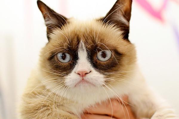 cat2-1376099016_600x0.jpg