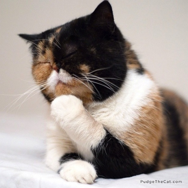 cat3-1376099016_600x0.jpg