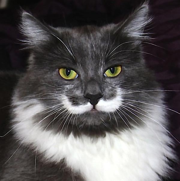 cat5-1376099017_600x0.jpg