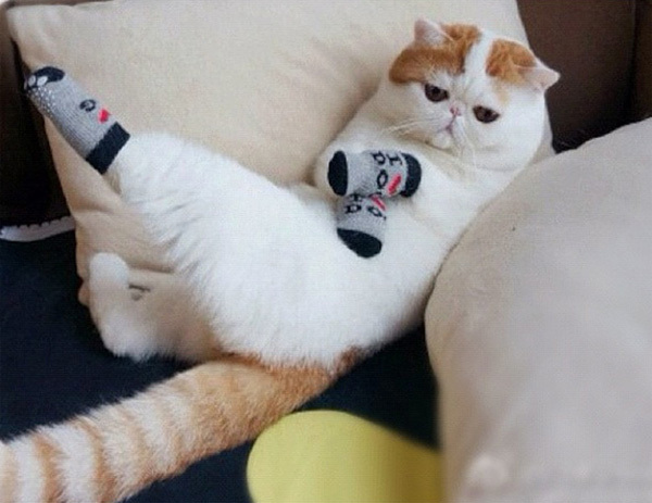 cat6-1376099017_600x0.jpg