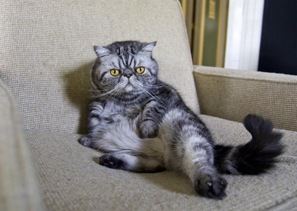 cat9-1376099017_600x0.jpg