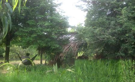 Ngôi nhà lụp xụp trong bụi cây, nơi diễn ra tội ác kinh hoàng như lời cảnh báo về hậu họa của rượu chè và thất học.
