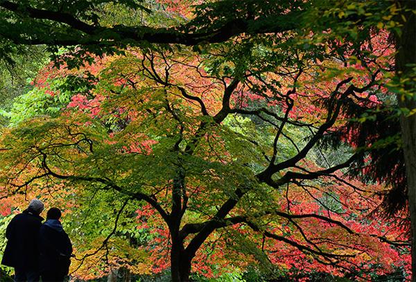 autumn12-1377246818.jpg