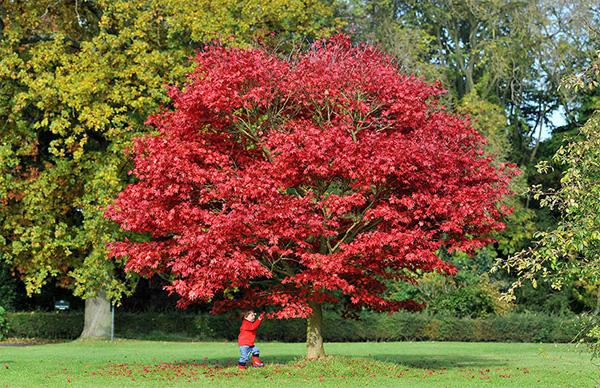 autumn2-1377246816.jpg