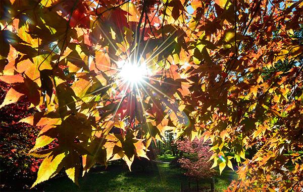 autumn4-1377246816.jpg