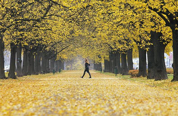 autumn5-1377246816.jpg