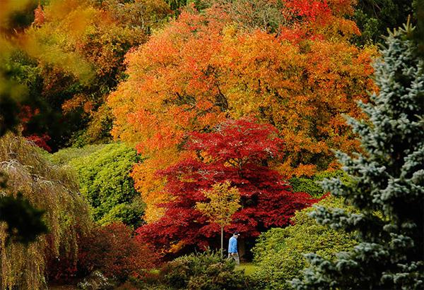 autumn7-1377246817.jpg