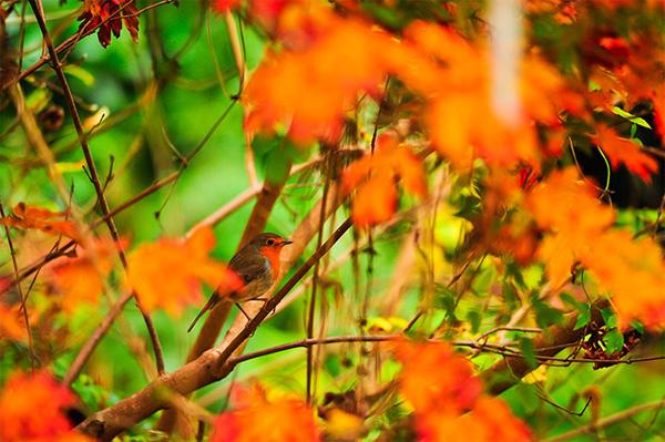 autumn8-1377246817.jpg