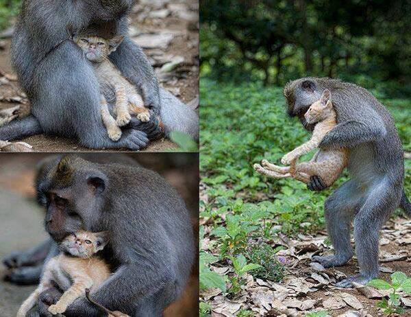 9-monkey-and-cat-1377742724.jpg