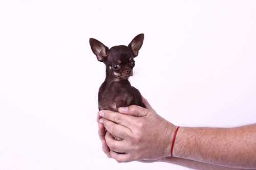 dog-6697-1379044979.jpg