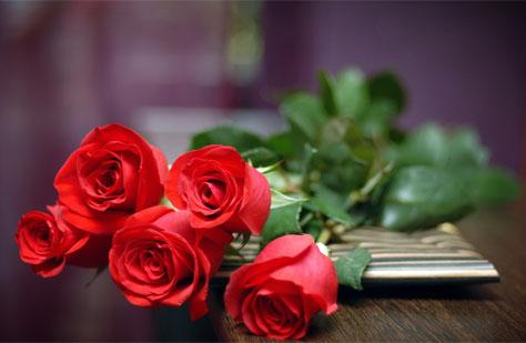 rose8-3801-1379734302.jpg