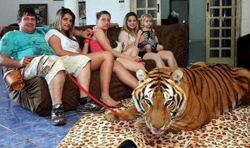 tiger1-3203-1380255643.jpg