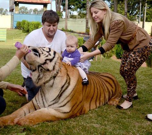 tiger2-5009-1380255644.jpg