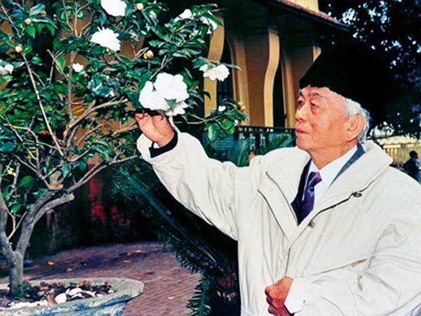 Hoa bạch trà trước sân nhà riêng 30 Hoàng Diệu của Đại tướng, loài hoa ông ưa thích.