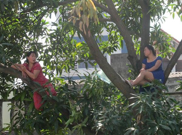 Hai phụ nữ trèo lên cây để ngăn cản lực lượng chức năng.