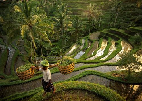 Bali_People1.jpg