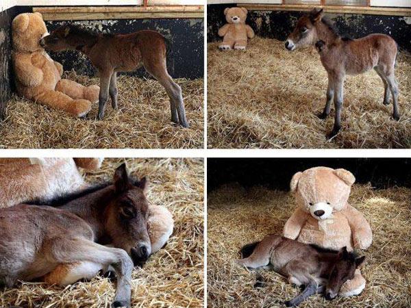 8-donkey-5958-1382582503.jpg
