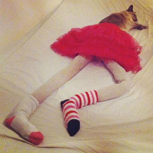 cat16-4917-1383585793.jpg