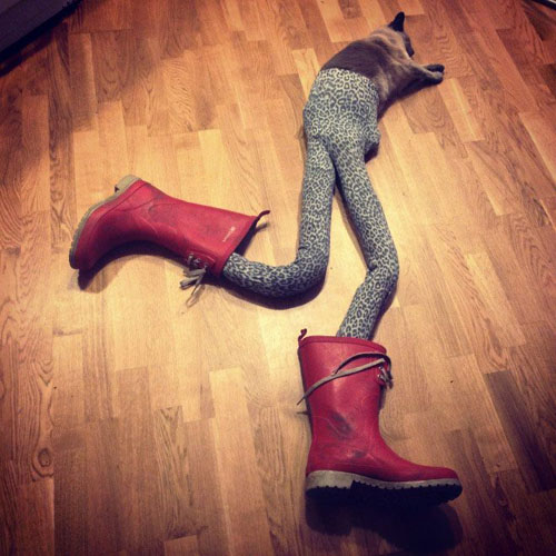 cat2-8308-1383585792.jpg