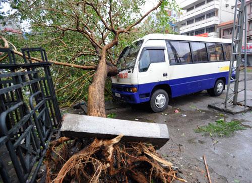 Một xe khách chạy tuyến Móng Cái bị cây đổ đè vỡ kính.