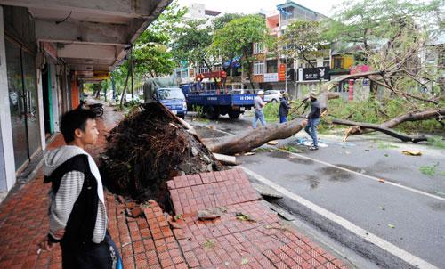Cây xanh trên nhiều tuyến phố của  TP Hạ Long bị đổ gẫy, gây cản trở giao thông. Ngay sau khi bão ngớt gió, lực lượng chức năng của tỉnh đã có mặt để thu dọn và giải phóng giao thông.